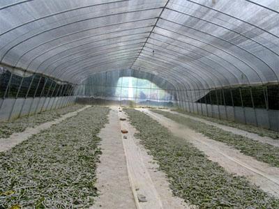 养鱼大棚 玻璃温室高清图片