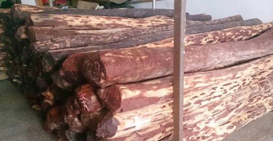 檀香紫檀多产于热带,亚热带原始森林,以印度迈索尔邦地区,缅甸地区所