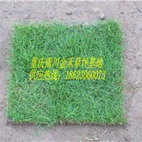 重庆南川金禾草坪基地