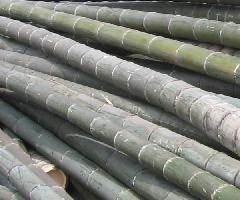 供应新旧毛竹竹片竹笆竹梯安全网脚手片