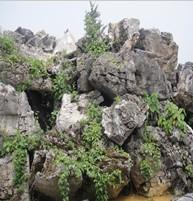 广东驳岸石、广东园林石、广东英德大型英石景观石特质
