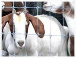 供应铁丝网养殖/铁丝网围栏/优质铁丝网