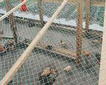 供应山鸡围网养殖用围网