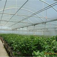 供应山东济南青岛烟台温室大棚微雾降温加湿设备直销喷雾系统