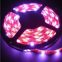 LED软灯条价格,LED软灯条生产厂家批发