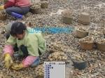 山东沂河鹅卵石厂