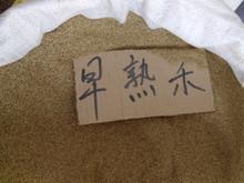 石家庄厂家供应园林绿化高中低档早熟禾草籽