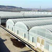 日光温室大棚建设 日光温室大棚 寿光日光温室工程 金翰温室