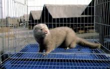 不锈钢水貂笼|304材质的水貂养殖笼