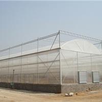 供应薄膜连栋温室
