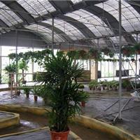 供应绿色生态餐厅
