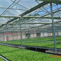 供应阳光板温室造价