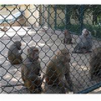 动物园围栏网型号及规格,动物园防护网批发