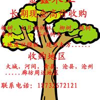 大城县金鑫木业加工厂