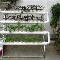 供应单面管道水培机