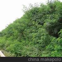 河北立业边坡绿化有限公司