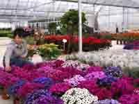 成都植物租摆||成都花卉租摆||成都办公室植物租赁||