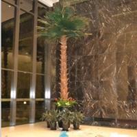 供应美国金山葵保鲜树批发-常青藤