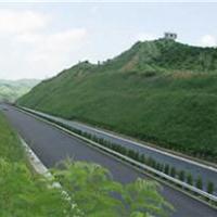 供应高速公路边坡绿化厂家