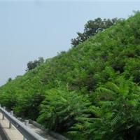 河北衡水歌润边坡绿化工程有限公司