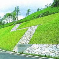 矿山植被绿化|矿山植被恢复绿化工程方案