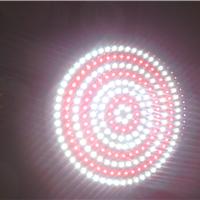 供应LED射灯、天花灯、PAR灯、猪肉灯