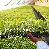 专业生产营养基质,育苗基质的厂家
