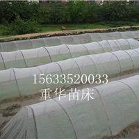 乙烯防虫网,塑料防虫网,不锈钢防虫网专卖
