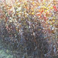 供应苗木树皮,大量产品供应,可到场检查