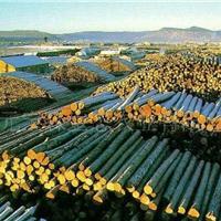 漠河县园林木材销售