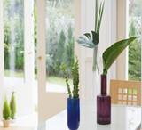 成都绿植出租 用户至上用心服务 让用户满意到家