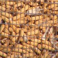 唐山农业用圈玉米电焊网-镀锌农用电焊网厂