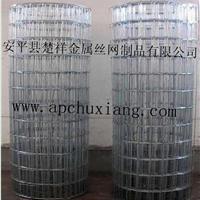 供应楚祥镀锌电焊网,不锈钢电焊网