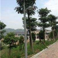 供应辽宁丹东营口新农村建设用太阳能路灯