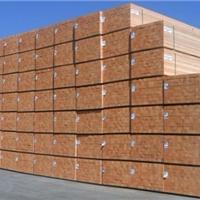 供应欧洲赤松 樟子松