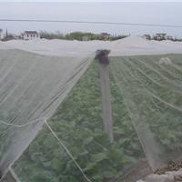 供应防虫网批发