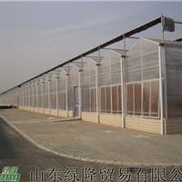 专业建造蔬菜温室大棚,寿光绿隆,更专业,温室工程