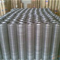 折扣批河北镀锌电焊网-黑丝电焊网品牌供应