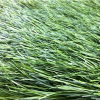 双色单丝足球场人造草坪