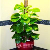 上海清丽园艺有限公司