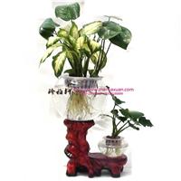 供应水培器皿氧气花瓶,灯光花瓶养花的鱼缸