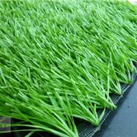 供应丹东足球场人工草皮|人造运动草坪