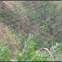 供应河北衡水工艺护栏网