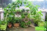 武汉快乐农场园艺有限公司