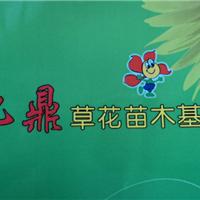 青州九鼎花卉园艺场