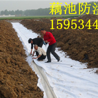 供应藕池土工膜价格