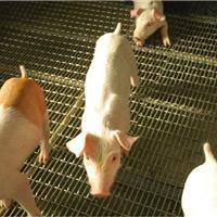 供应养猪网细节图片-锰钢养猪编织网价格