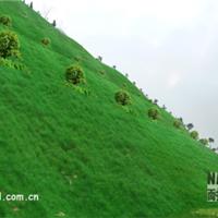 浙江湖州边坡复绿材料供应部