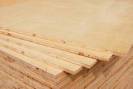 1650杉木优等品E1细木工板-大王椰