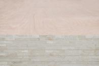 1600乔木工板-大王椰